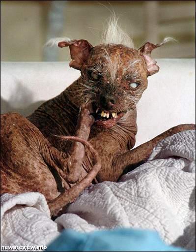 lelijke dikke hond